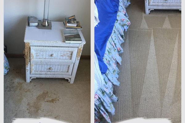edina-carpet-cleaning