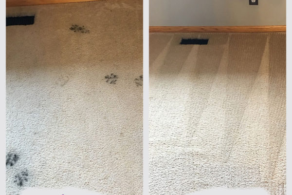 minneapolis-pet-stain-removal-job