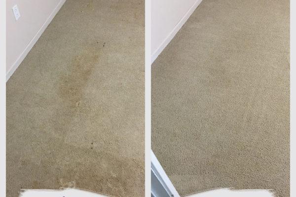 saint-paul-carpet-cleaning-job